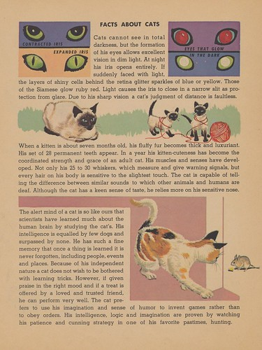 Facts About Cats | by The Cardboard America Archives
