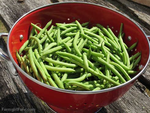 Freshly picked Masai filet beans (haricots verts) | by Farmgirl Susan