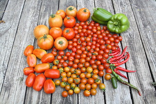 4lb6oz (2Kg) of tomato | by dzogchen79