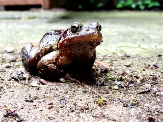 Toad | by akrabat