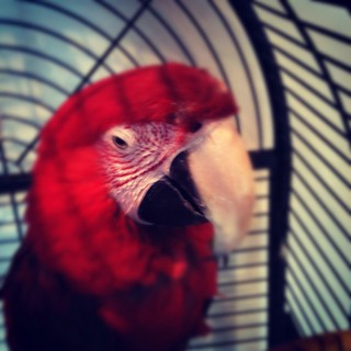 Monty the Parrot ponders the sale of Instagram | by fragglehunter aka Sleepy G