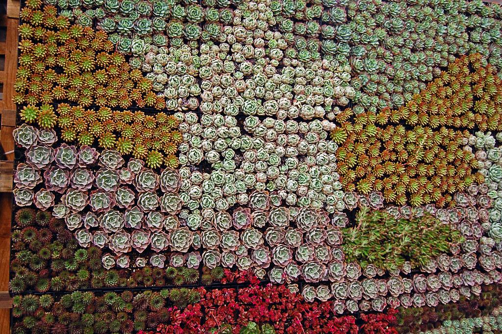 ... San Francisco Garden Show Succulent Gardens Succulent Wall | By  FarOutFlora