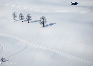 Shades of Winter | by RainerSchuetz