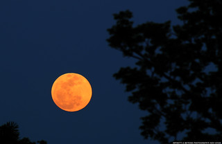 2012 Super Moon | by Infinity & Beyond Photography