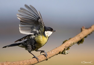 In A Flap | by StevieC - Photography
