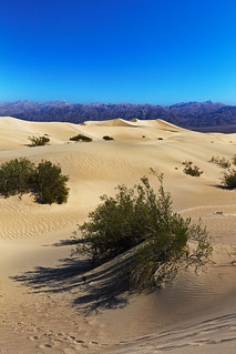 Mesquite Flat Dunes, Death Valley | by jensvins