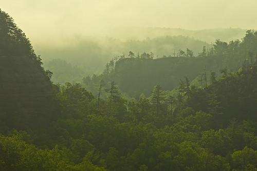 Clearing fog in the Red River Gorge, KY | by Ulrich Burkhalter