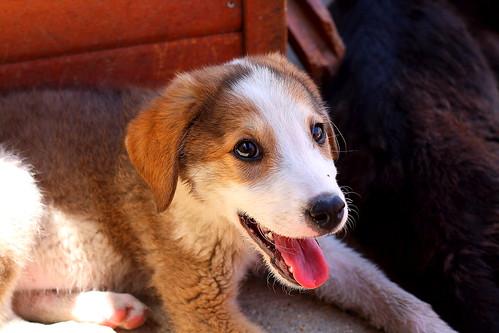 Rescue Dogs Near Little Rock
