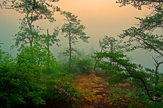 Foggy morning in the Red River Gorge, KY | by Ulrich Burkhalter