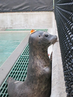 curious seal is curious | by : Nils