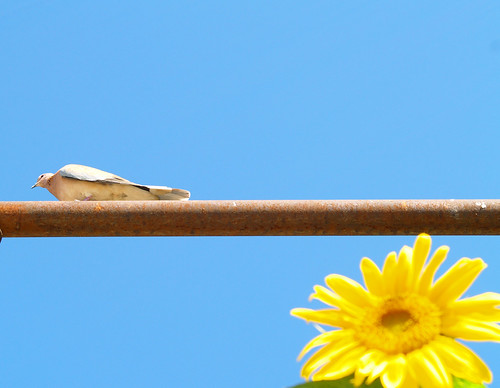 птичк и подсолнух
