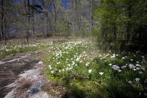 Georgia Nature Center Jobs