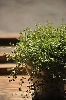 Thyme | by ~Maninas