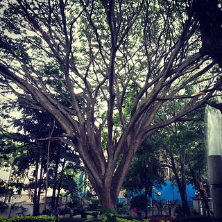 Mother nature is also part of the exhibition #tree #museum #nature #india #bangalore #igindia #raintree | by Scalino