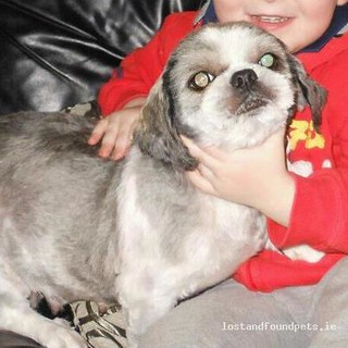[Reunited] Mon, Jun 25th, 2012 Lost Female Dog - Ardmore Close, Artane, Dublin | by Lost and Found Pets Ireland
