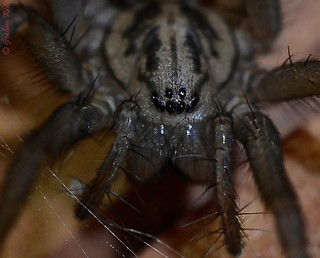 Spider from my shed | by kidda63