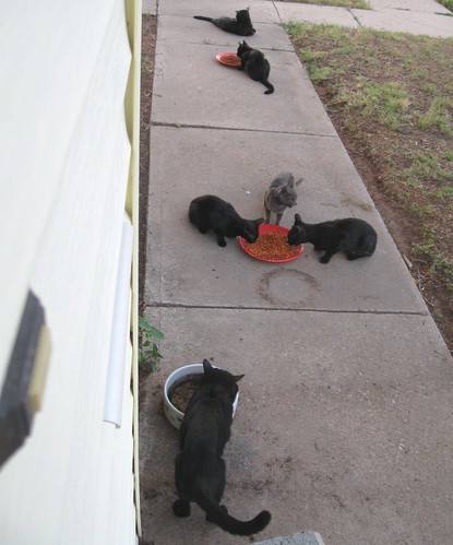 Six stray cats, chowing down | by Hairlover