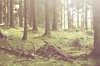 Into the forrest | by mazarin♥
