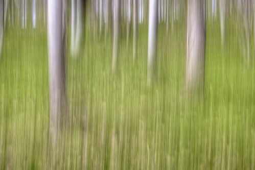 Intentional Camera Movement 2 - Mount Edgecombe Estate, Rame Peninsular, Cornwall | by john lunt