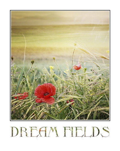 Dream Fields {framed} | by Light is colour