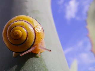 Snail & sky | by fxdx, mostly off for Holiday :-)