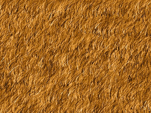 Straw Texture | by Chrisser