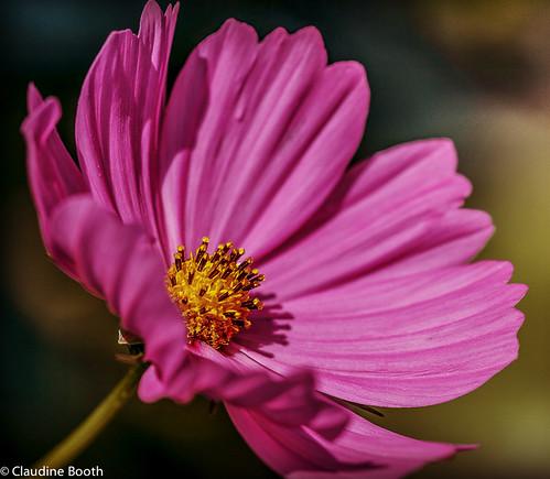 Et puis voici mon coeur voici des fruits des fleurs for Mon amaryllis ne fait que des feuilles