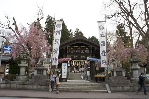 Sakurayama Shrine - Full Cherry Blossom Season in Morioka