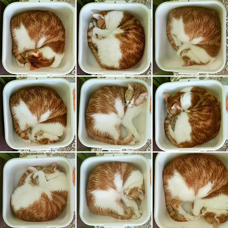 Tiled cat picture 😃 @Regrann from @cornelius.grayl  -  Collage of kitty in her box.  #cat #cats #catsoninstagram #catsofinstagram #catcuddles #meesha #meeshathecat #catstagram #meeshaisawesome #sleepingcat #Regrann