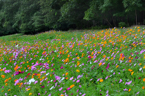 Wildflower Hillside | by hpaich