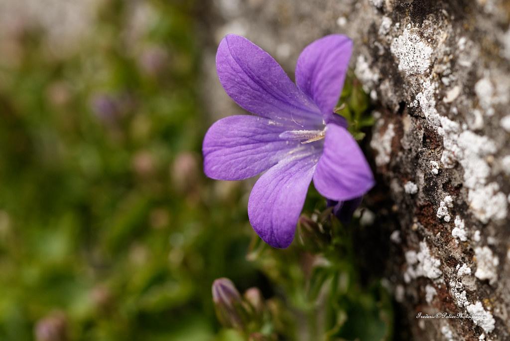 Small spring flowers test nikon d750 tamron 90mm macro 2 flickr small spring flowers test nikon d750 tamron 90mm macro 28 vc f004 mightylinksfo