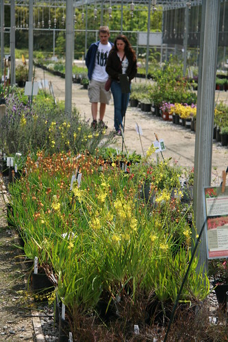Shoppers at the UC Davis Arboretum Teaching Nursery peruse the large selection of attractive, low-water, easy-care plants. Most of the plants sold at the nursery were also grown on site which means they are especially suited to our Central Valley climate.