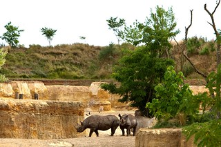 Rhinoceros du Bioparc de Doué | by Nite and Room Reporter