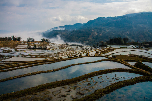 Rice Terraces | by V-A-K