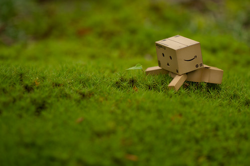 Danbo enjoy watching a pretty sprout