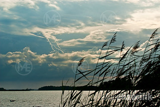Ominous clouds collecting over the sea with the silhouettes of seagrass in the foreground | by Arno Enzerink