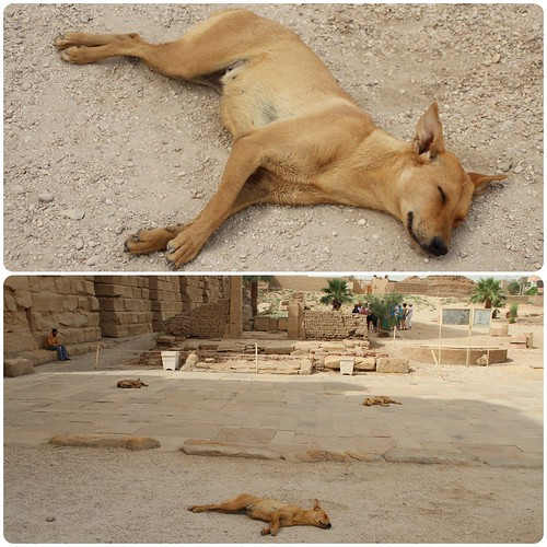 Sleeping Temple Dogs at Karnak Temple, Egypt | by ✿LEA✿