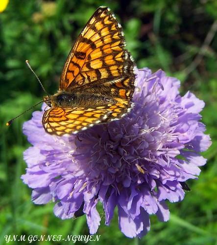 Papillon jardin botanique jardin des plantes de paris b for Papillons jardin botanique 2016