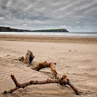 Driftwood & Dinas Hd B | by K_D_B 2.7 Million views. Thanks