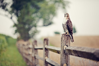 Perching eyes | by Thuyhn