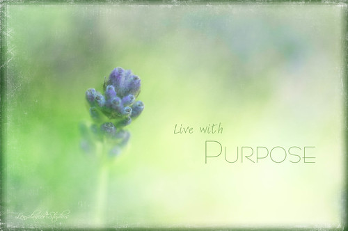 Live with Purpose | by Imagemakercan - The Lensdancer