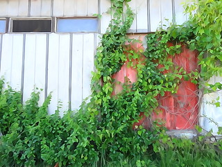 wc penlands vines cover red door | by zen