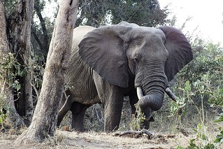 Trunk rest. | by Piet Grobler