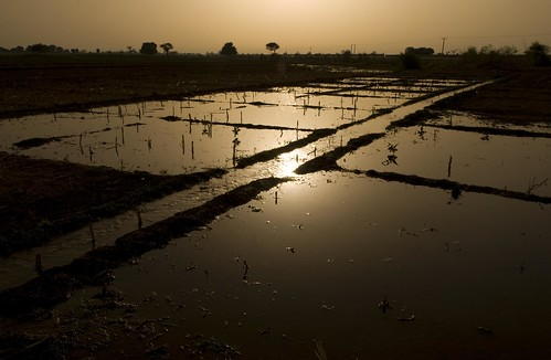 The sun sets on irrigated fields | by World Bank Photo Collection