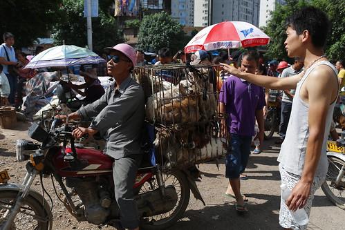 Dogs being taken to market