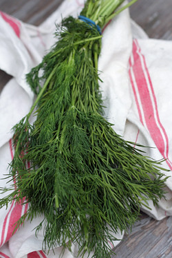 fresh dill | by David Lebovitz