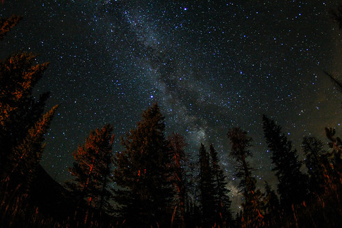 Milky Way through the pines | by One Last Cast Photography