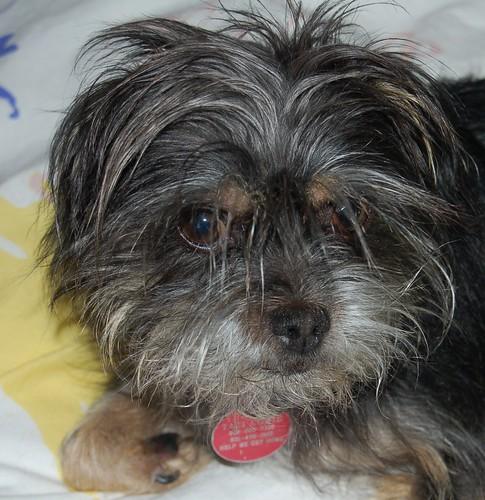 California Humane Society Dogs