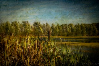 Bullrushes | by Roamer 57 (Not Around Much)