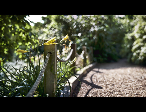 Fence Friday - Lily and Rope Edition | by PhotoJunket